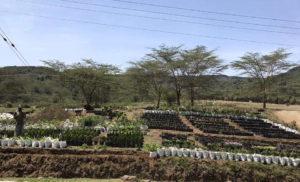 KENYA-2017-59